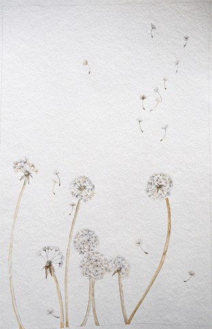 Dandelion (watercolor)