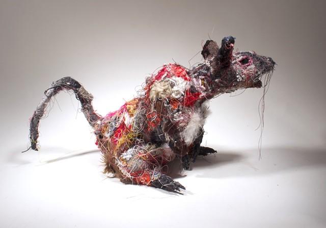 Rat #10