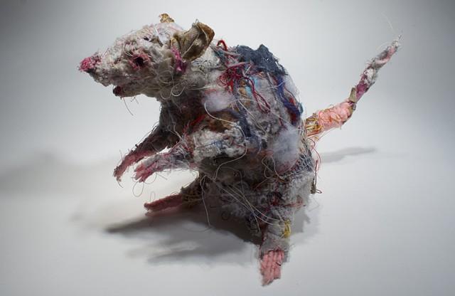 Rat #5