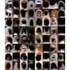64 Black Heads
