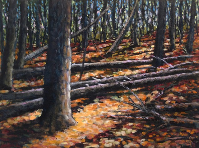 Light Through the Pines - SOLD