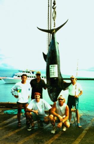 510 lb. Blue Marlin