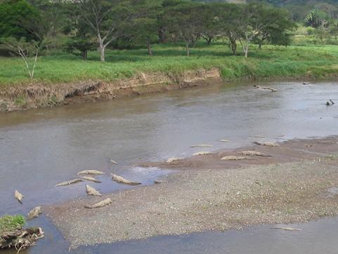 Costa Rican Crocs