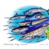 Atlantic Big Game (JC Penney)