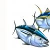 oc tuna 07