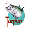 tarpon 3