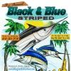 Black & Blue Striped Shootout  Maui, Hawaii
