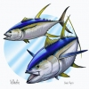 Yellowfin (JC Penney)