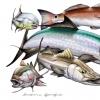Southern Sportfish