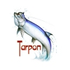 tarpon 1