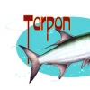 tarpon 2