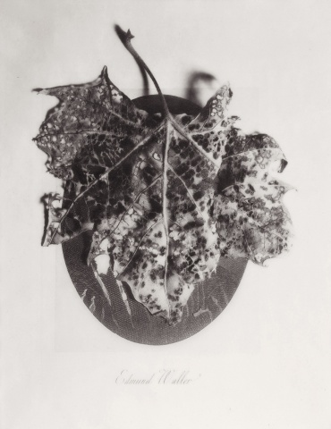 Edmund an the Leaf