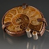 Ammonite Pin with Citrine