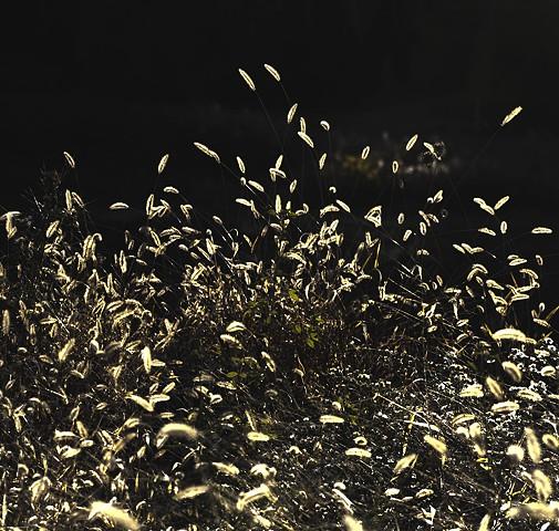 Swarm.