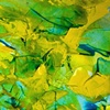 Yellow Pond Lilies II