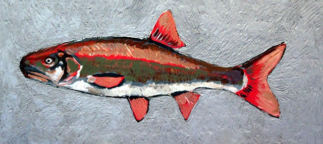 colorful fish (pikeminnow) on a silvery background