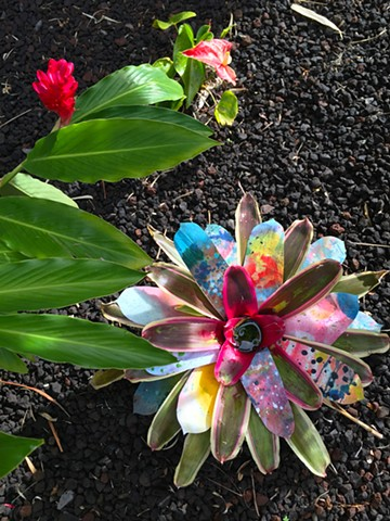 Bromeliad Hawaii