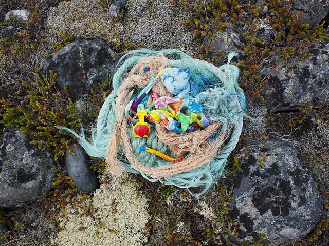 Nest for the Arctic Tern