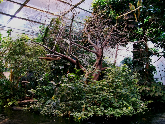 Synthetic Tropical Rainforest Biome (Parrots)
