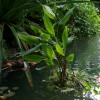 Synthetic Tropical Rainforest Biome (Pond Pump)