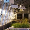GMO Research Crops (High Yield Rice)