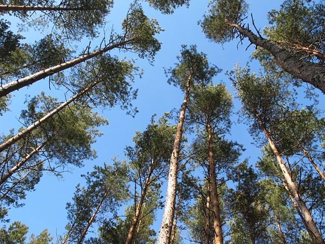 WOODS / TREE TOPS