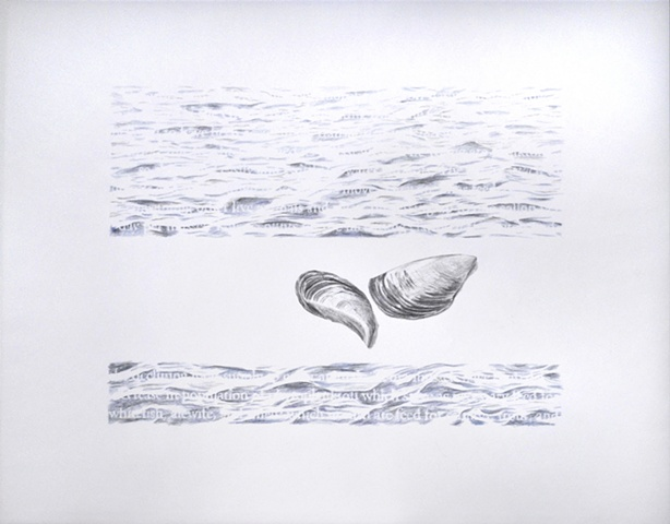 Joanne Aono Lake Michigan zebra mussel drawing