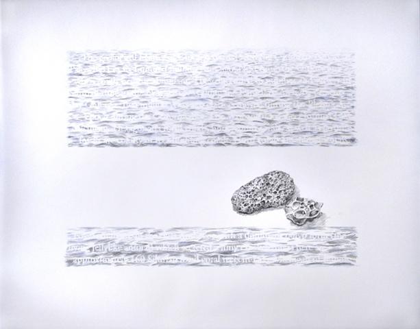 Joanne Aono Lake Michigan fossil coral drawing