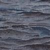 Zebra Mussel Detail