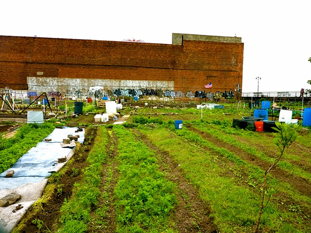 community crops, Coney Island