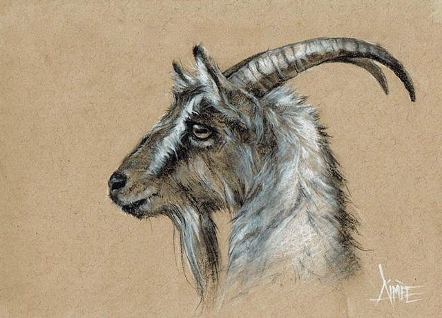 aimee kuester animal natural history museum la charcoal pastel for sale drawing art artwork goat goats billy kid horns evil satanic animals beautiful for sale aimee artist