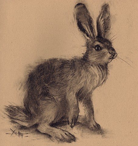rabbit bunny bun hare wild wild hare wildlife aimee kuester charcoal art for sale cute