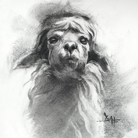 aimee kuester animal natural history museum la charcoal pastel for sale drawing art artwork alpaca llama regal beautiful animals beautiful for sale aimee artist