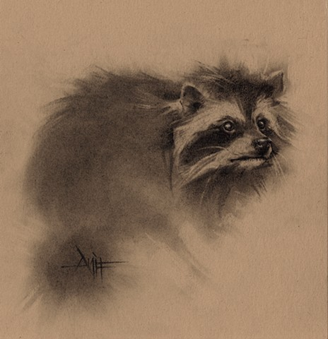 aimee kuester animal natural history museum la charcoal pastel for sale drawing art artwork raccoon bandit stripes cute coon night nocturnal animals beautiful for sale aimee artist