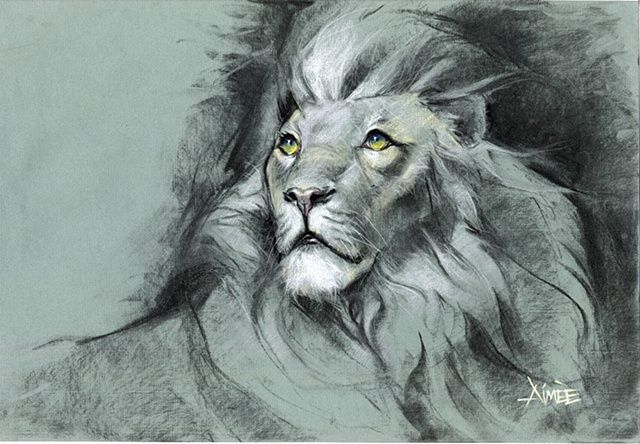lion sketch theatre aimee kuester charcoal drawing original big cats king jungle aslan epic pastel