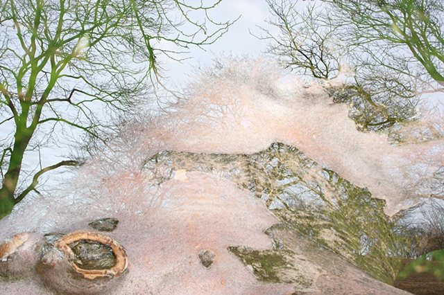 arboreal abstract macro landscape digital photomontage