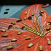 Tiger Lily - detail