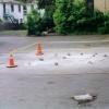 Cones in parking lot.  Ithaca, NY.