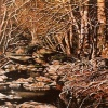 Creek:Samuel Taylor Park