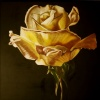 Yellow Rose #2