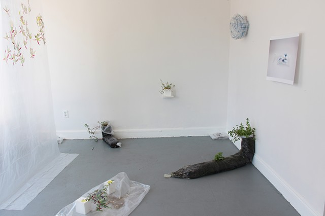 contemporary art installation, local species, relational aesthetics, Alicia Escott