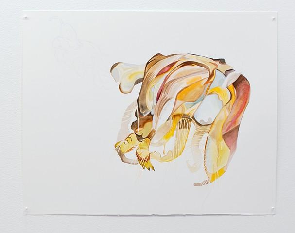 Philotes sonorensis (Nabokov's #58)