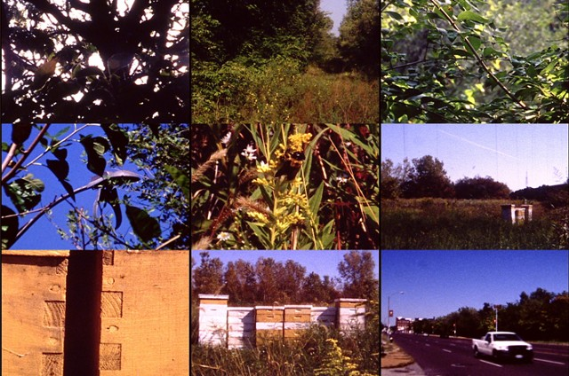 Pruitt-Igoe Bee Sanctuary ( film )