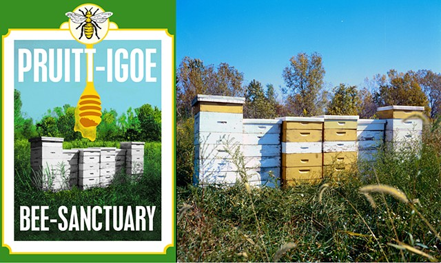The Pruitt-Igoe Bee Sanctuary