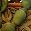 Cactus Planter IV
