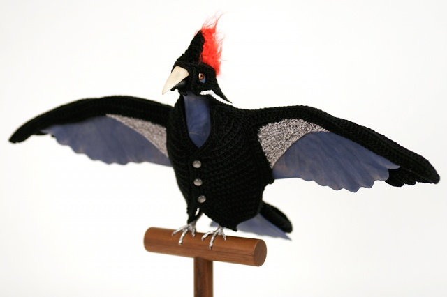 Biodiversity Reclamation Suits for Urban Pigeons: Ivory Billed Woodpecker
