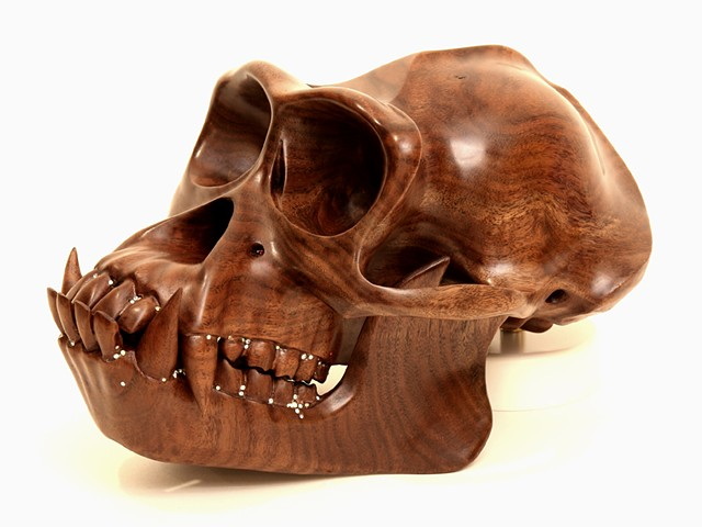 Hominid: Chimpanzee II