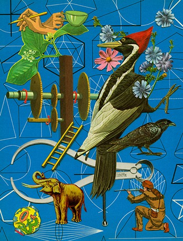 Ivory Billed woodpecker elephant ivory geometry collage