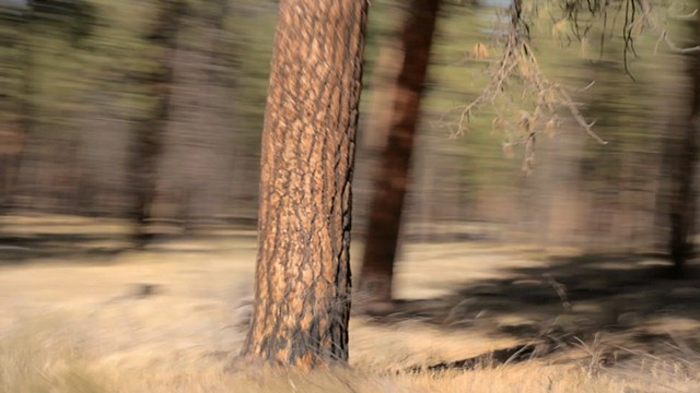 Turning Pines #6 (film still)