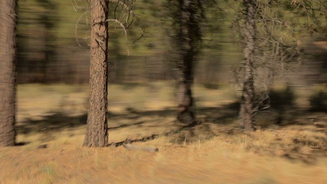 Turning Pines #8 (film still)